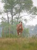 Single Horse in Spring Paddock Royalty Free Stock Images