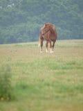 Single Horse in Spring Paddock Stock Image