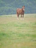 Single Horse in Spring Paddock Stock Photos