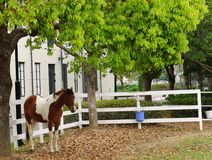 Single Horse Stand Under The Big Tree at Dawn Stock Photo