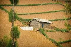 Single house on cultivated land Stock Photo