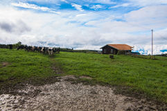 Single house at dairy farms. This view taken from dairy farm near kundasang area royalty free stock image