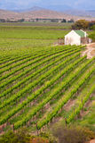 Single house in vineyard Stock Images