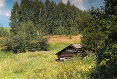 Single hut in the middle of the forest. In summer forest Royalty Free Stock Photo