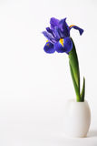 Single Iris Lily in White Vase on White Background Royalty Free Stock Photo
