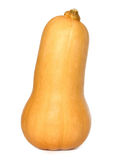 Single isolated butternut squash Royalty Free Stock Photography