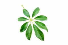 Single isolated leaf Stock Photography