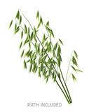 Single isolated oats head path included 2 white background Royalty Free Stock Image