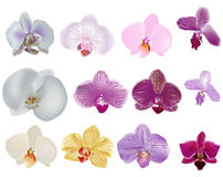 Single isolated orchid flowers ollection Royalty Free Stock Image
