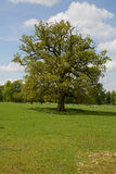 Single isolated tree Royalty Free Stock Image