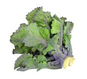 Single kalette floret. A hybrid of Kale and Brussels sprouts isolated on a white background stock photo