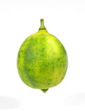 Single Key Lime Fruit. A view of a single small key lime fruit Stock Photos