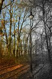 Single lamp next to the almost naked trees - half black and white. Single lamp next to the almost naked trees in the park during late fall. Colorful leaves and Royalty Free Stock Image