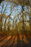 Single lamp next to the almost naked trees. In the park during late fall sunny days. Colorful leaves and shadows on the ground Stock Image