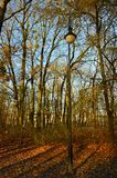 Single lamp next to the almost naked trees. In the park during late fall sunny days. Colorful leaves and shadows on the ground Royalty Free Stock Photography