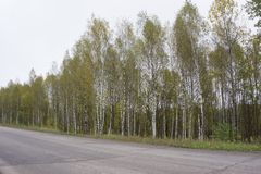 A single lane highway with a sharp bend in the road. There`s a single yellow line in the middle of the road. There`s lots of bir. Ch and evergreen trees along stock images