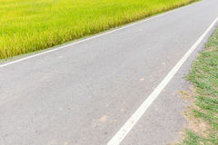 Single lane pathway straight through rice paddy in field farm. Royalty Free Stock Photography