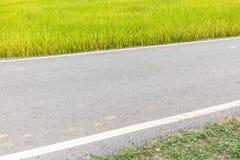 Single lane pathway straight through rice paddy in field farm. Stock Photo