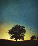 A single large oak tree at sunset or sunrise Royalty Free Stock Image