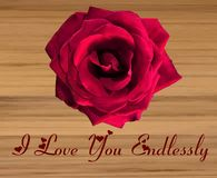 Single Large Red Rose on a wooden background royalty free illustration