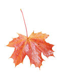 Single leaf Stock Photography
