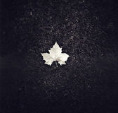 Single Leaf Royalty Free Stock Images