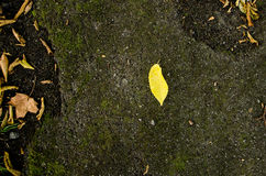 Single leaf alone background. Single leaf standing out alone on ground stock photos