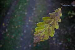 Single forest leaf. Single leaf in autumn forest Royalty Free Stock Photography