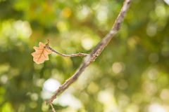 Single leaf. Royalty Free Stock Images