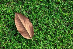 Single Leaf on Green Grass Royalty Free Stock Images