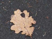 Single leaf on the ground covered with rain drops. stock image