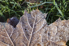 Single leaf with hoarfrost. Leaf with hoarfrost in autumn time Stock Photos