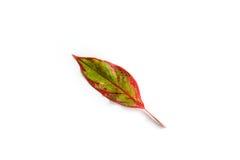Single leaf isolated Stock Photography