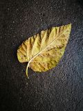 Single leaf lying on the wet ground. With hard background Stock Images