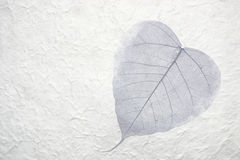 Single leaf in paper. Beautiful dried leaf placed in hand made paper royalty free stock image
