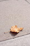 Single leaf on pavement Royalty Free Stock Image