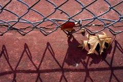 Single leaf on red concrete next to fence Stock Image
