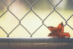 Single. Leaf stuck in fence Royalty Free Stock Photos