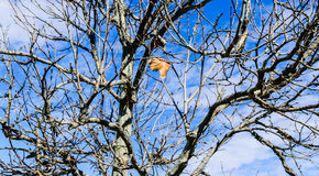 Single leaf in tree Stock Photo