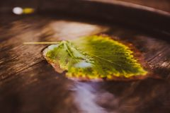Single leaf on water close up. Autumn. Wooden background stock image