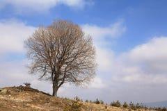 Single leafless tree stock images