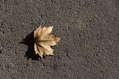 Fallen leave Royalty Free Stock Image