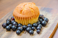 A single lemon muffin with blackcurrant. Single fresh and tasty muffin surrounded by blackcurrant Stock Photo