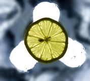 Single lemon slice on the wet surface Stock Photos