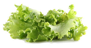 Single lettuce Royalty Free Stock Images