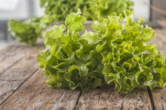 Single lettuce head over rustic wooden background Stock Photo