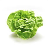 Single lettuce Royalty Free Stock Photography