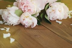 Pink Peonies Spring summer bouquet Flat Lay Wooden Background Copy space. Beautiful Pik Fresh Flowers. stock photography