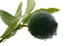 a single lime Royalty Free Stock Photos