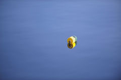 Single lone lobster float on calm New England waters Stock Photo